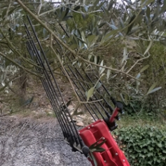 peigne pour olive